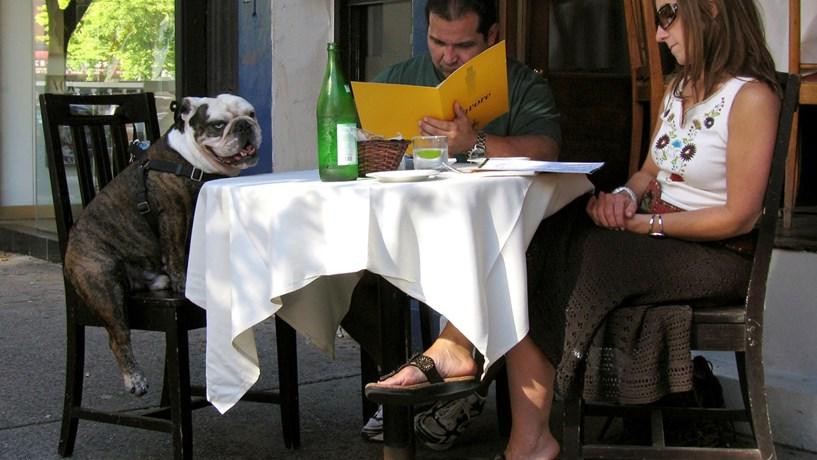 A partir de Maio os animais de estimação podem entrar em restaurantes